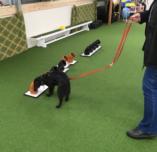 Scent Detection at Paws in Wales